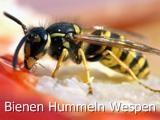 Bienen Hummeln Wespen